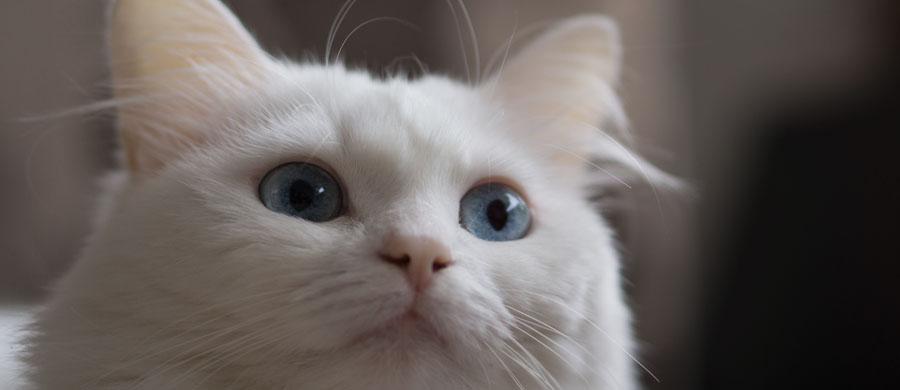 Angora Namen 1001 Katzennamen